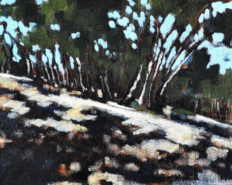 San Diego California Eucalyptus Grove in Balboa Park