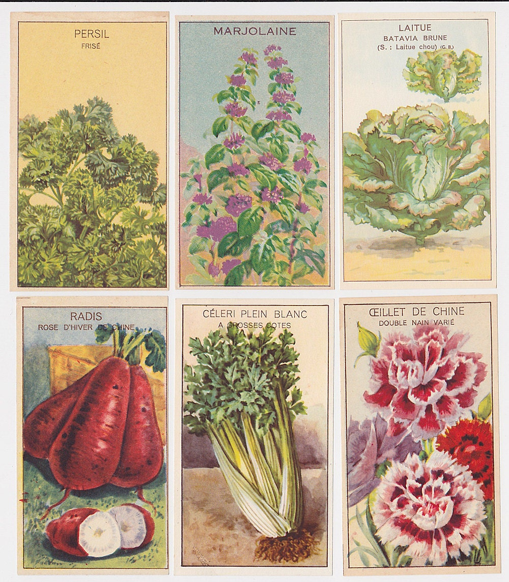 14 Antique French Vegetable, Herb and Flower Seed Packet Labels BOTANIC PRINT - simplyfrenchvintage