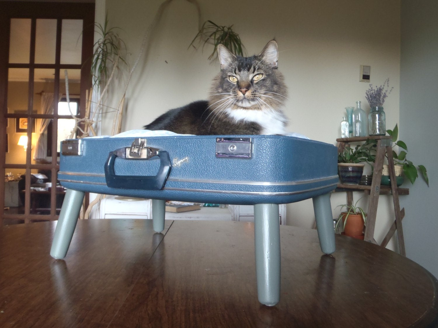 Lovable Luggage Pet Bed - Navy, Grey and White - Retro Modern - 2 dollars goes to carescatshelter
