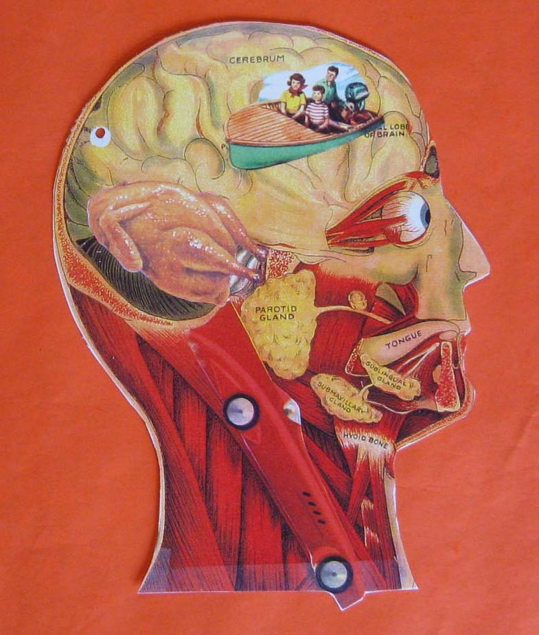 True Anatomy - A Visual Chart of the Actual Workings of the Human Mind