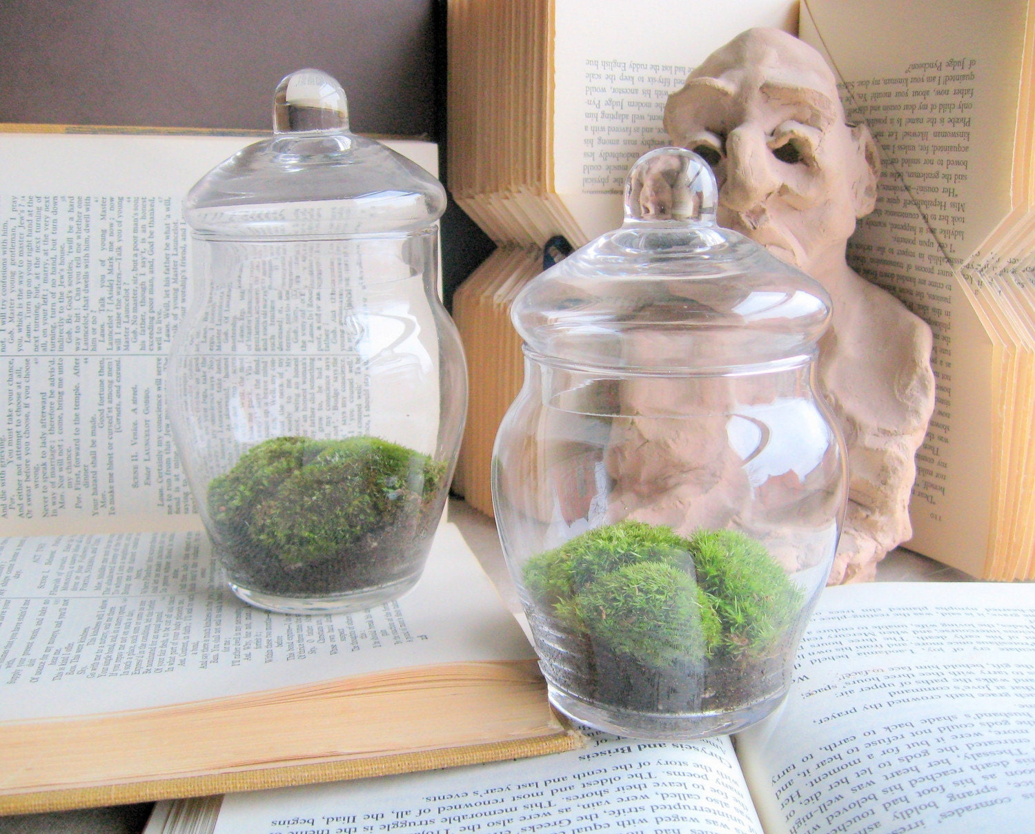 mini moss terrariums set of 2