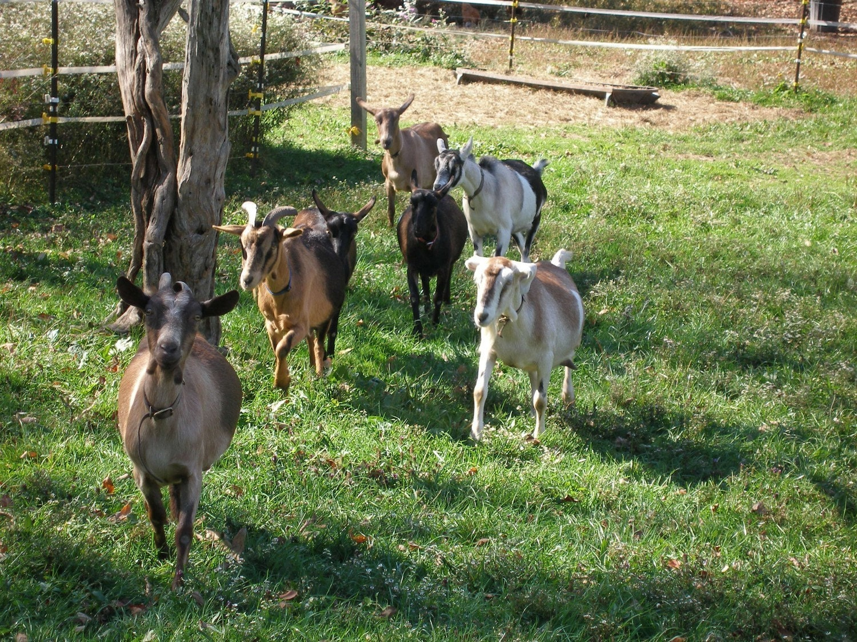 Wonderful Chocolate Goat Milk Fudge-Half Pound