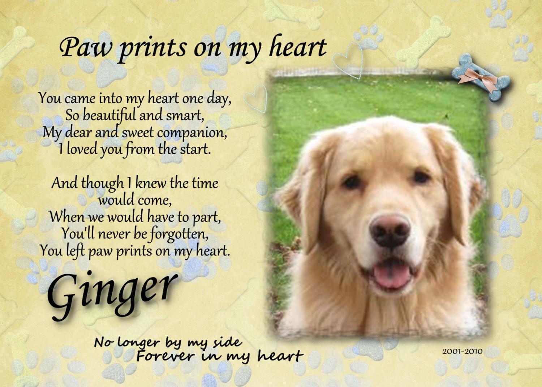Ο Ginger του...