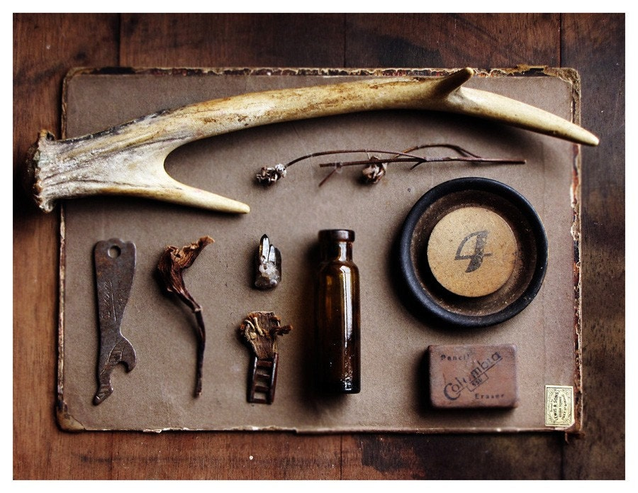 Trophy - curated still life - natural history - limited edition - 8X10 photographic print