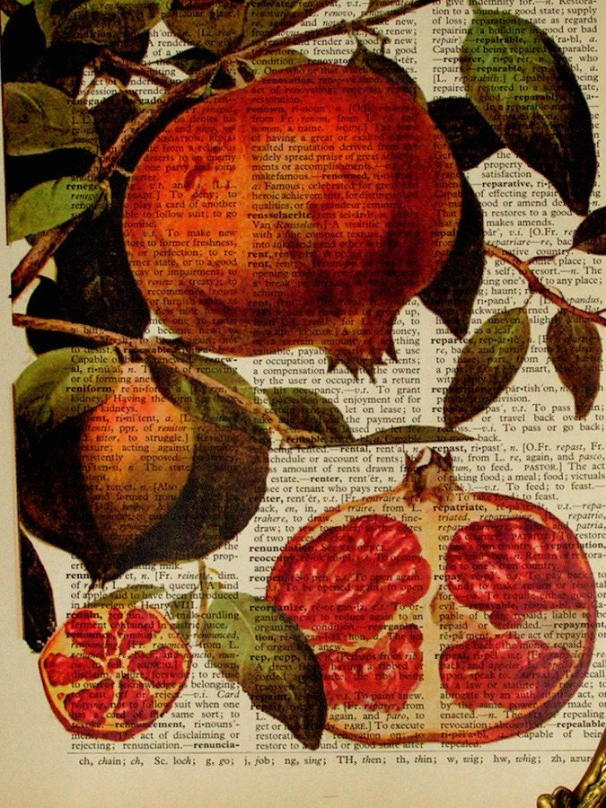 Pomegranate Dictionary book page Illustration by lunaclaydesign