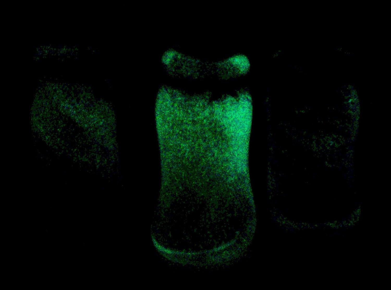 Copal and Sandalwood Perfume Oil Blown Glass Glow in the Dark Bottle