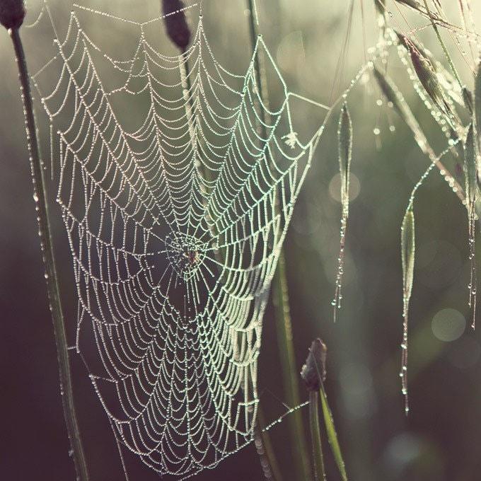 Pearly dew drops drop - Fine art photograph - spider web
