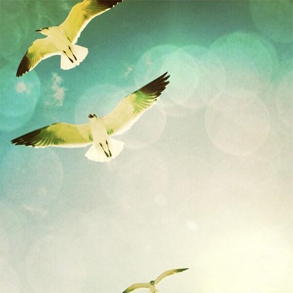 Free as a Bird - 8X8 Fine Art Print