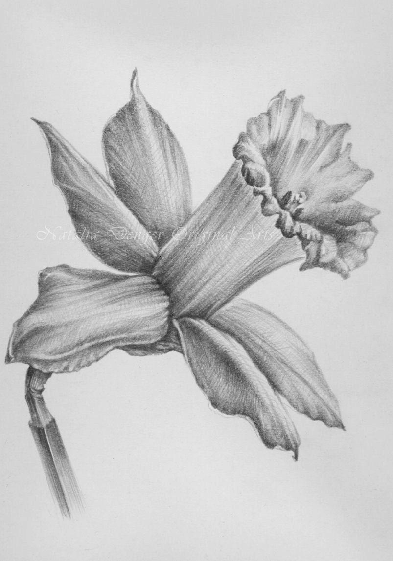 Watch - Drawings Pencil of flowers video