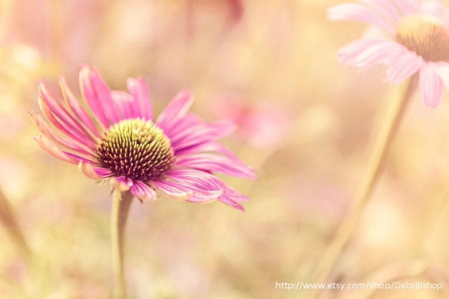 Summer Flower Garden -ConeFlower Pink Nature -Photograph - Home Decor  Fine Art Print -8x10 -16x24 -20x30 - DebiBishop