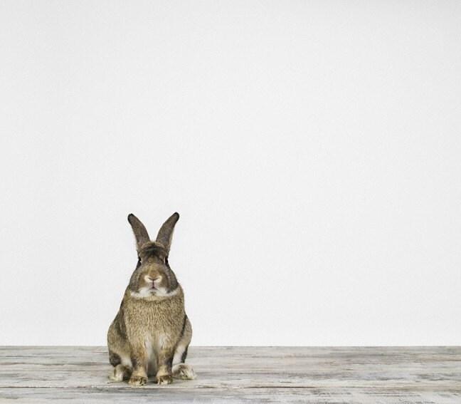 Bunny No. 1, 7 x 8 Fine Art Print