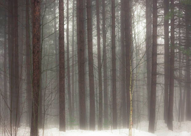 Nature photography, rustic, pine, brown white, fog, woodland wall decor, 5x7 - Raceytay