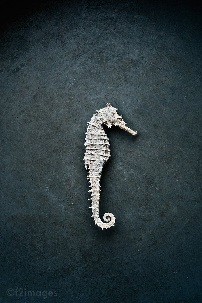 8x12 Seahorse - f2images