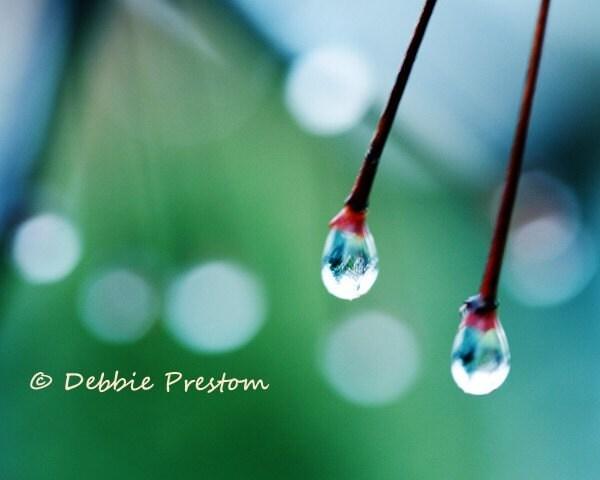 Wet Kisses - Colorful 8x10 Rain Photograph Print