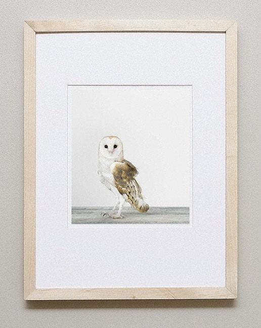 Owl, 7 x 8 Fine Art Print