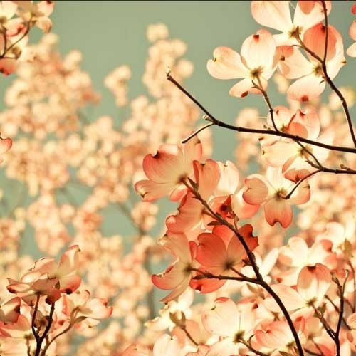 И весна Возник на Садовом ярмарки.  цветок фотографии.  розовый потертый шик декора.  готовые рамы.  подарок для нее.  романтического искусства стене
