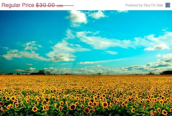 33% OFF SALE Forever mustard yellow ochre summer sunflowers aqua teal turquoise sky white clouds prairies -8x12 Fine Art Nature Photo