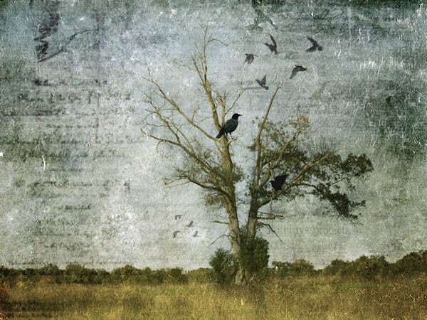 Print of blackbirds in tree