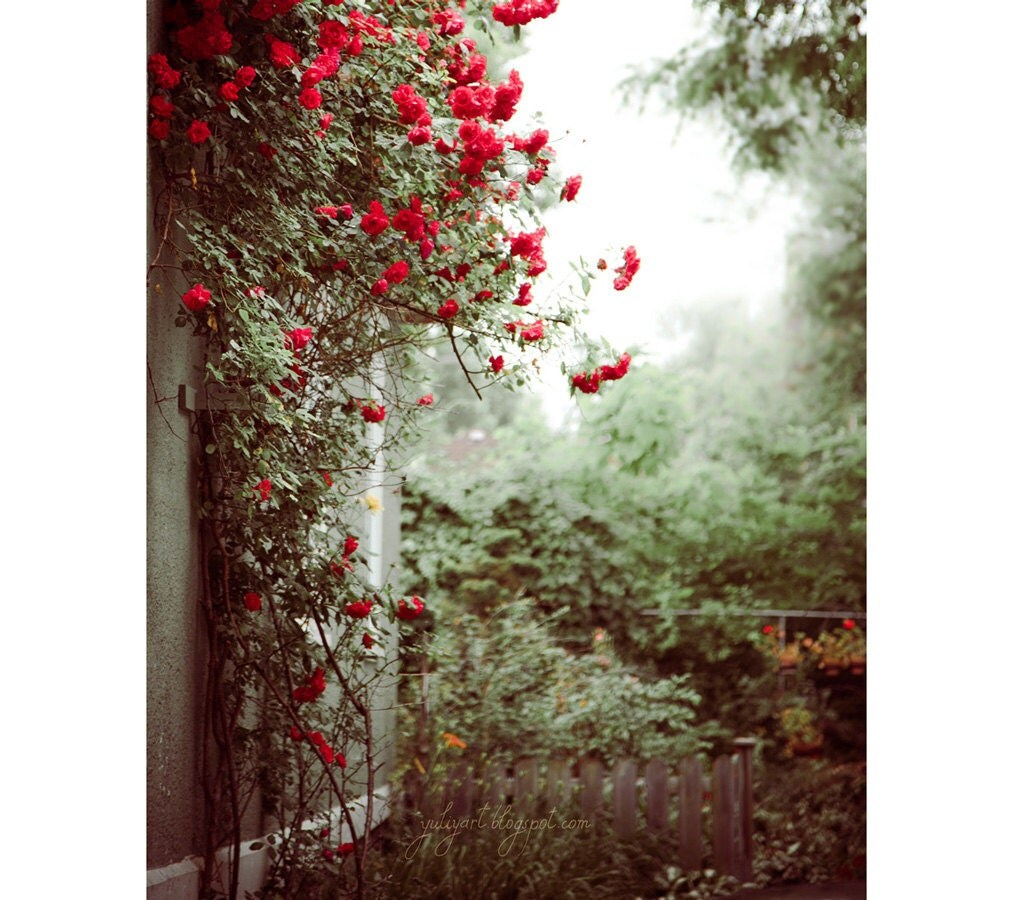 Back Yard - fine art photo print nature red roses blossom botanical green plants garden grey interior decor romantic picture Oht - GoldenSection