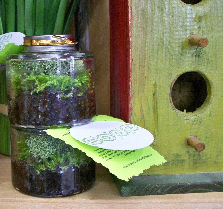 Stackables Set of 2 Moss Terrariums, Moss Garden in a jar