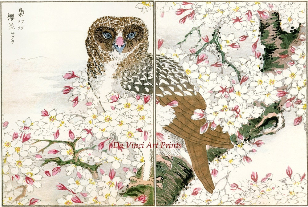Japanese Art. Woodblock Bird and Flower Print Reproductions: Numata Kashu - Owl and Cherry Blossoms, c.1880s - Fine Art Print - DaVinciArtPrints
