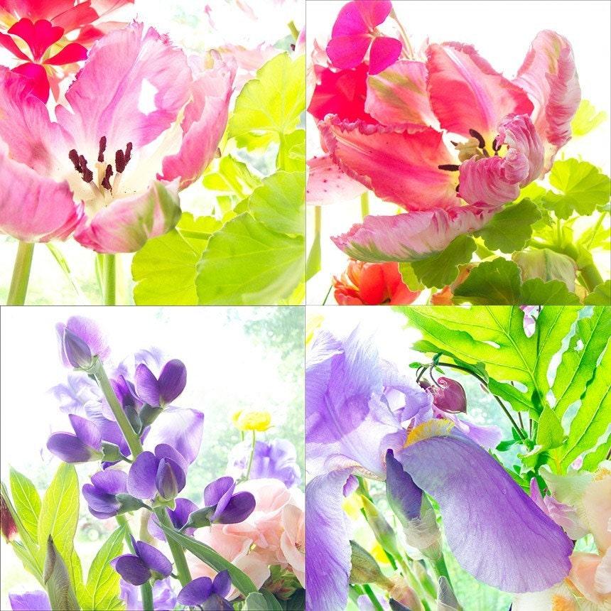 Sale, Four Fine Art Photographs Bright Morning