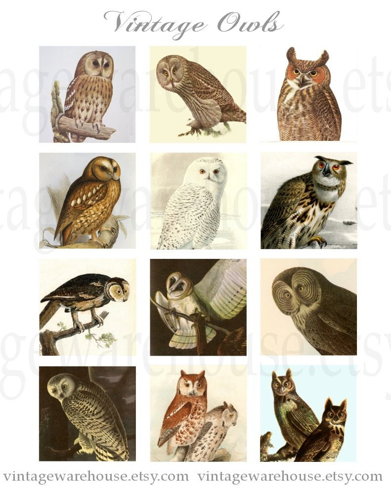 Vintage Owl Print Images & Pictures - Becuo
