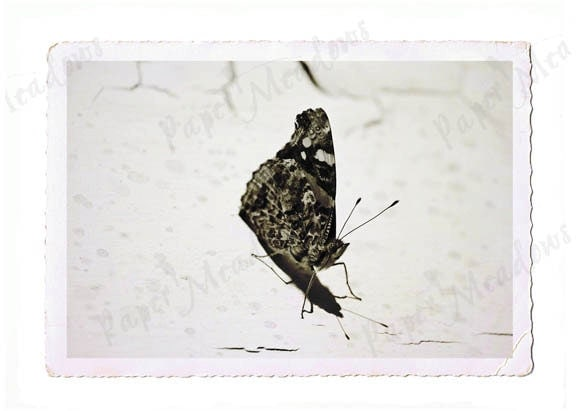 Butterfly Photography Download - 5x7 photogragh - Vintage Cottage Shabby Chic Decor Minimalistic Summer