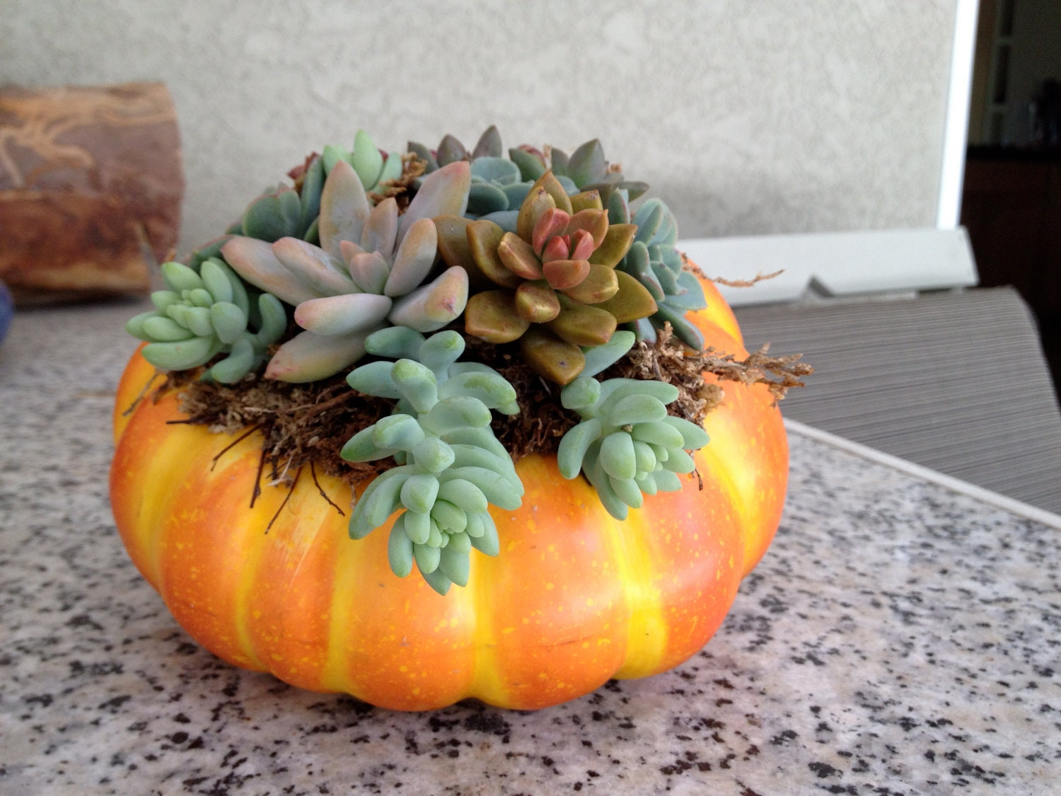 succulents in a pumpkin,  halloween arrangement, fall arrangement, hostess gift, table top - woogiesplace