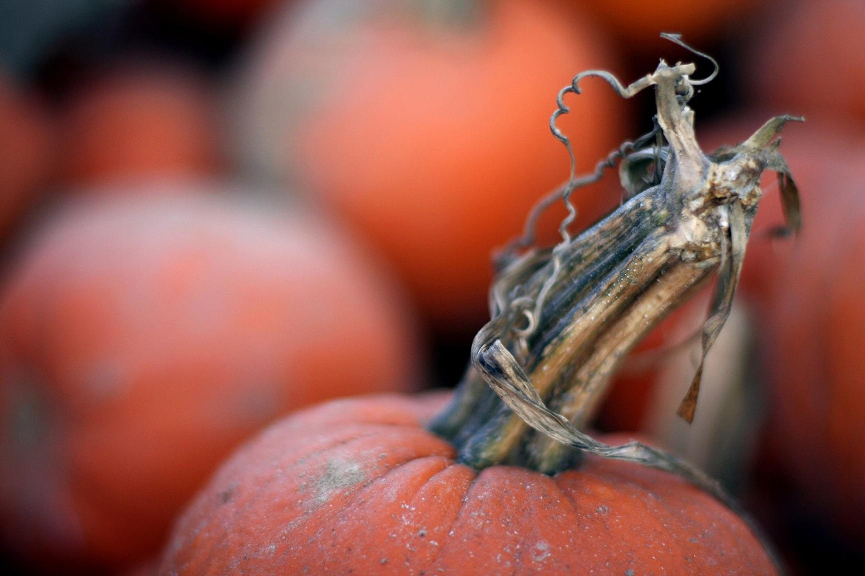 Curly-stemed pumpkin fine art photograph