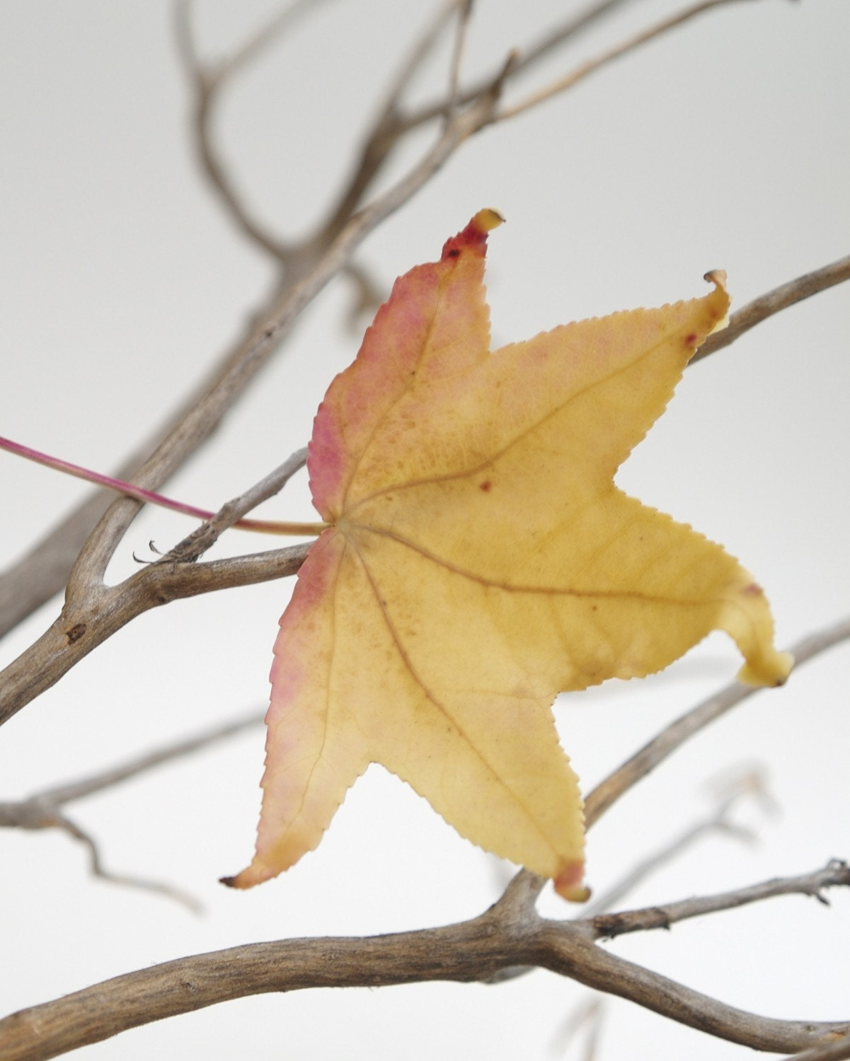 Yellow Leaf - Fine Art Photograph