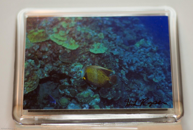 Angle Fish Magnet, Secret Santa, Army Veteran, Nature - HLRoperPhotography