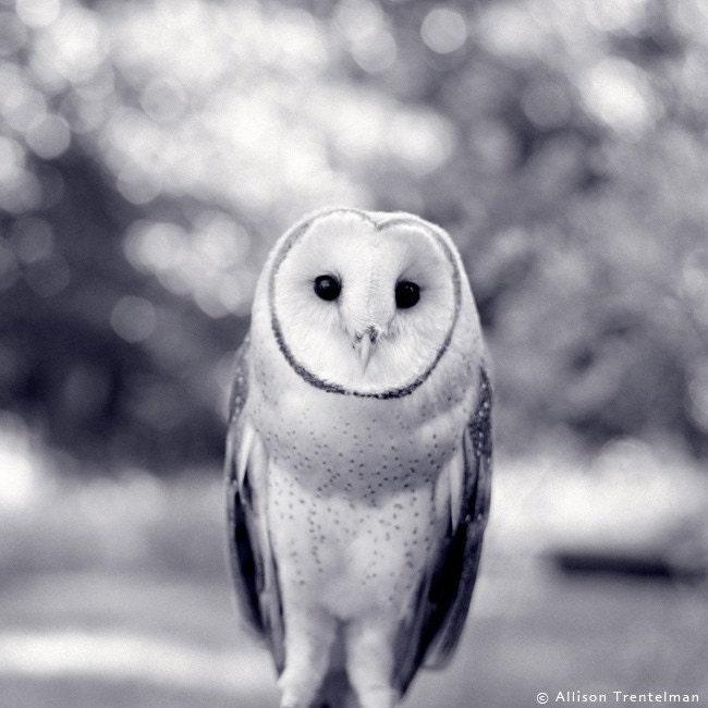 Newton the Barn Owl Card