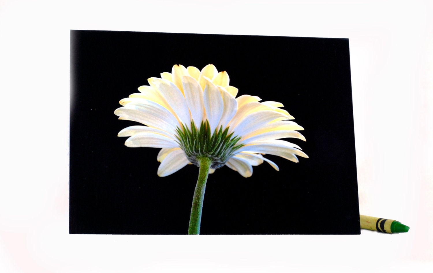 Gerber Beauty-Blank Photography Note Cards, Keepsake Cards, White Flower Art. - ONEMAGICALMOMENT