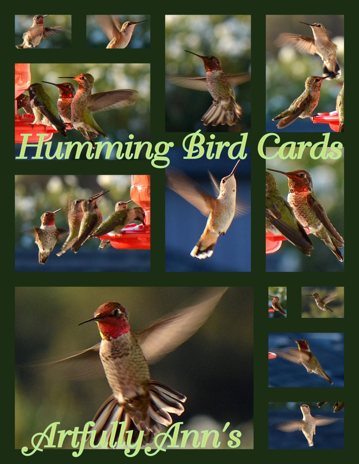 2013 Humming Bird Cards - set of 6 - The Humming Bird Collection, blank