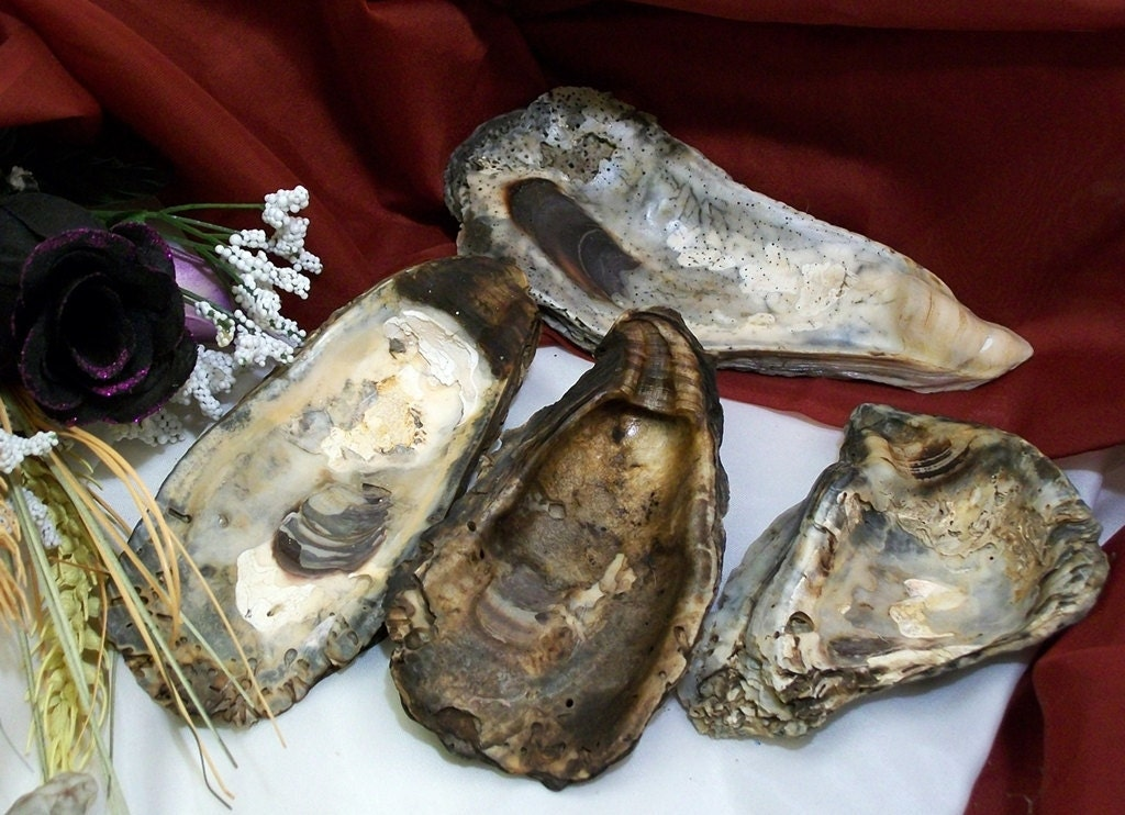 Oyster Shell and Mini Sacred Sage Smudge Set