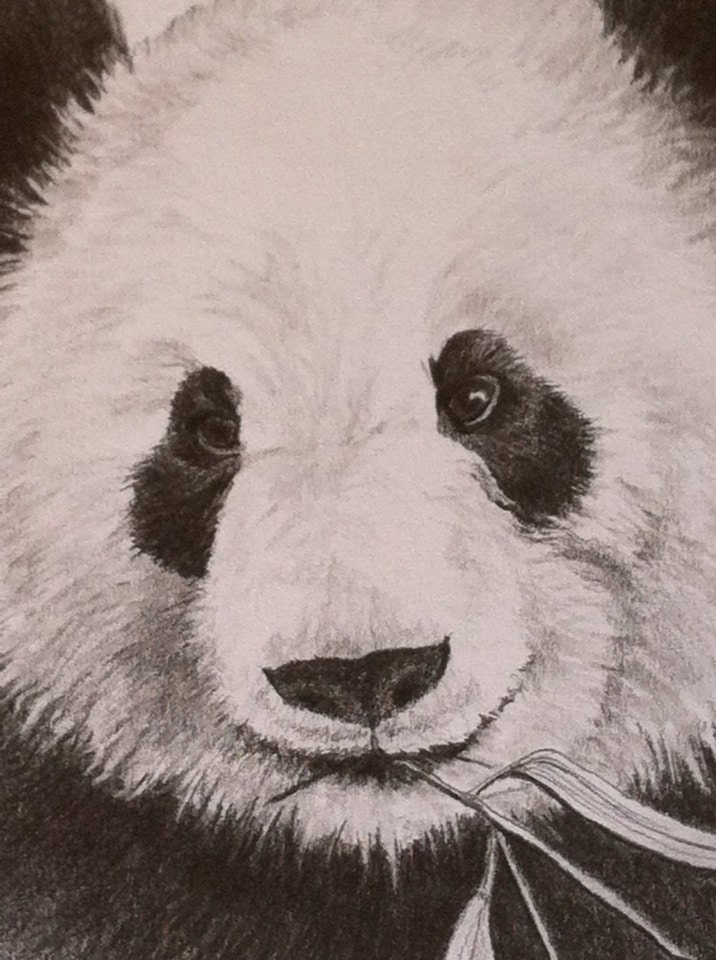 Add it to your favorites to revisit it later Panda Drawing In Pencil