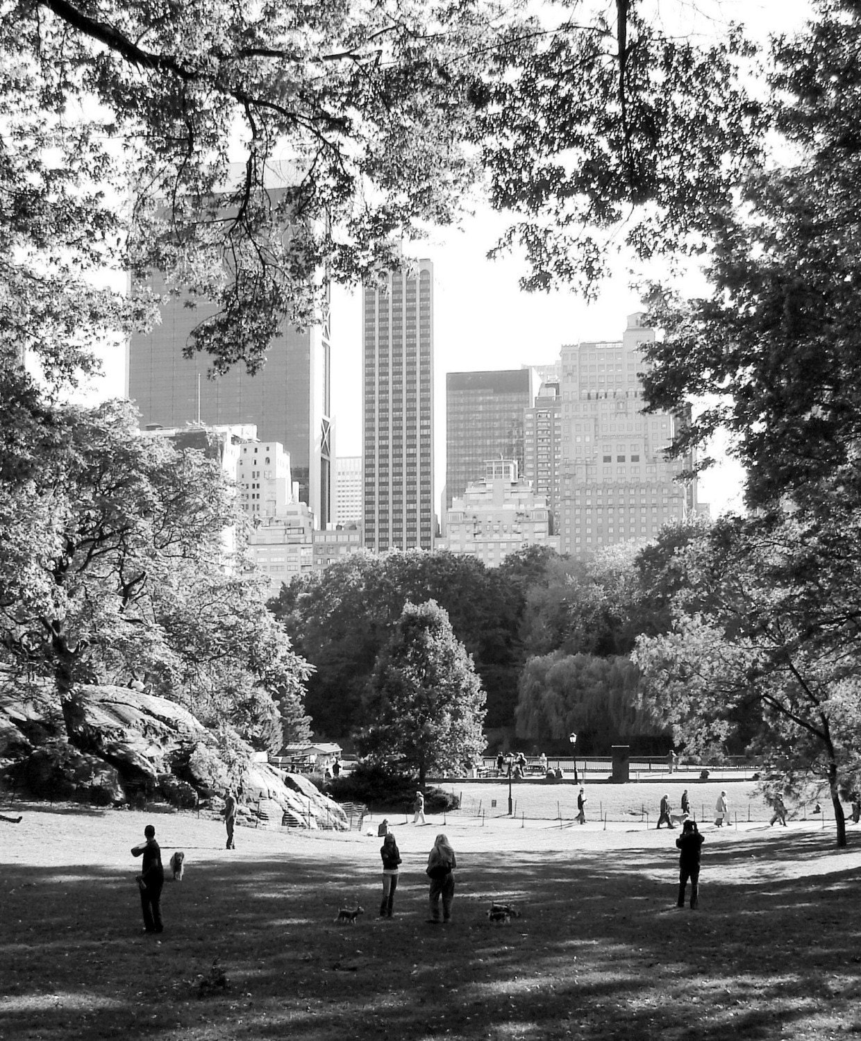 Dog Park NYC - Photography 8x10