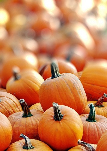 Pumpkins for Sale - 5x7 Fine Art Photography print  BOGO SALE