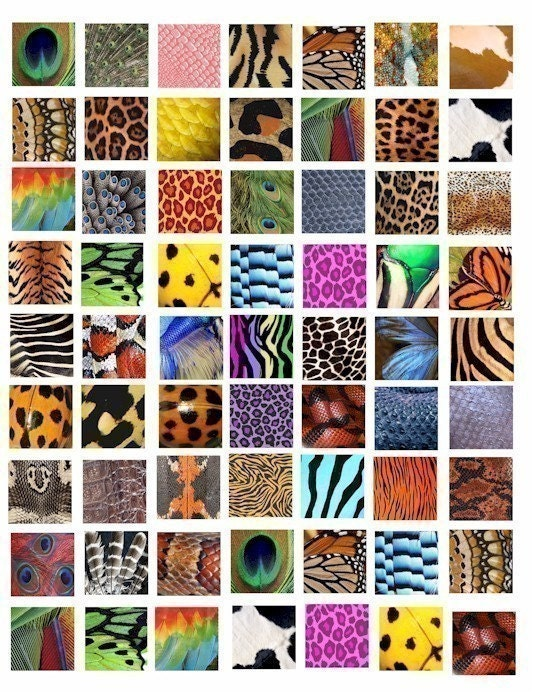 animal patterns in art. Animal Insect skin textures patterns clip art collage 1 inch squares tiger