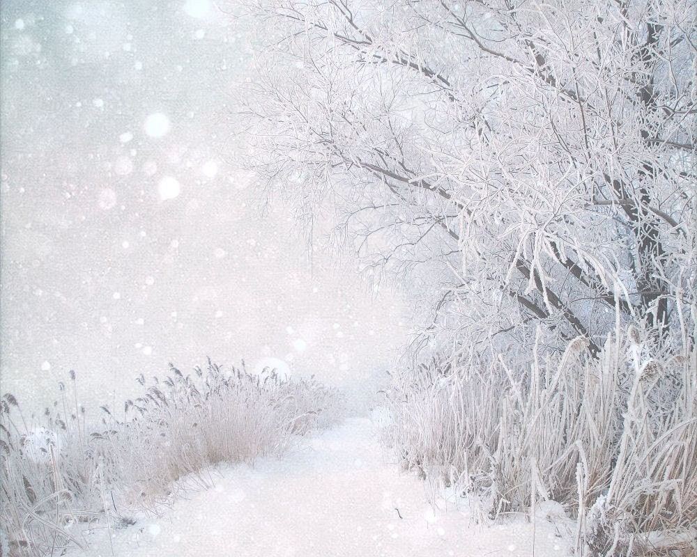 snowy winter landscape photography art