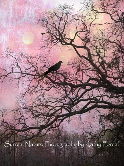 "Nature Photography, Surreal Trees, Ravens, Gothic, Purple, Pink, Haunting Fantasy Trees, Crows, Fine Art Photography 8"" x 12"" - KathyFornal"
