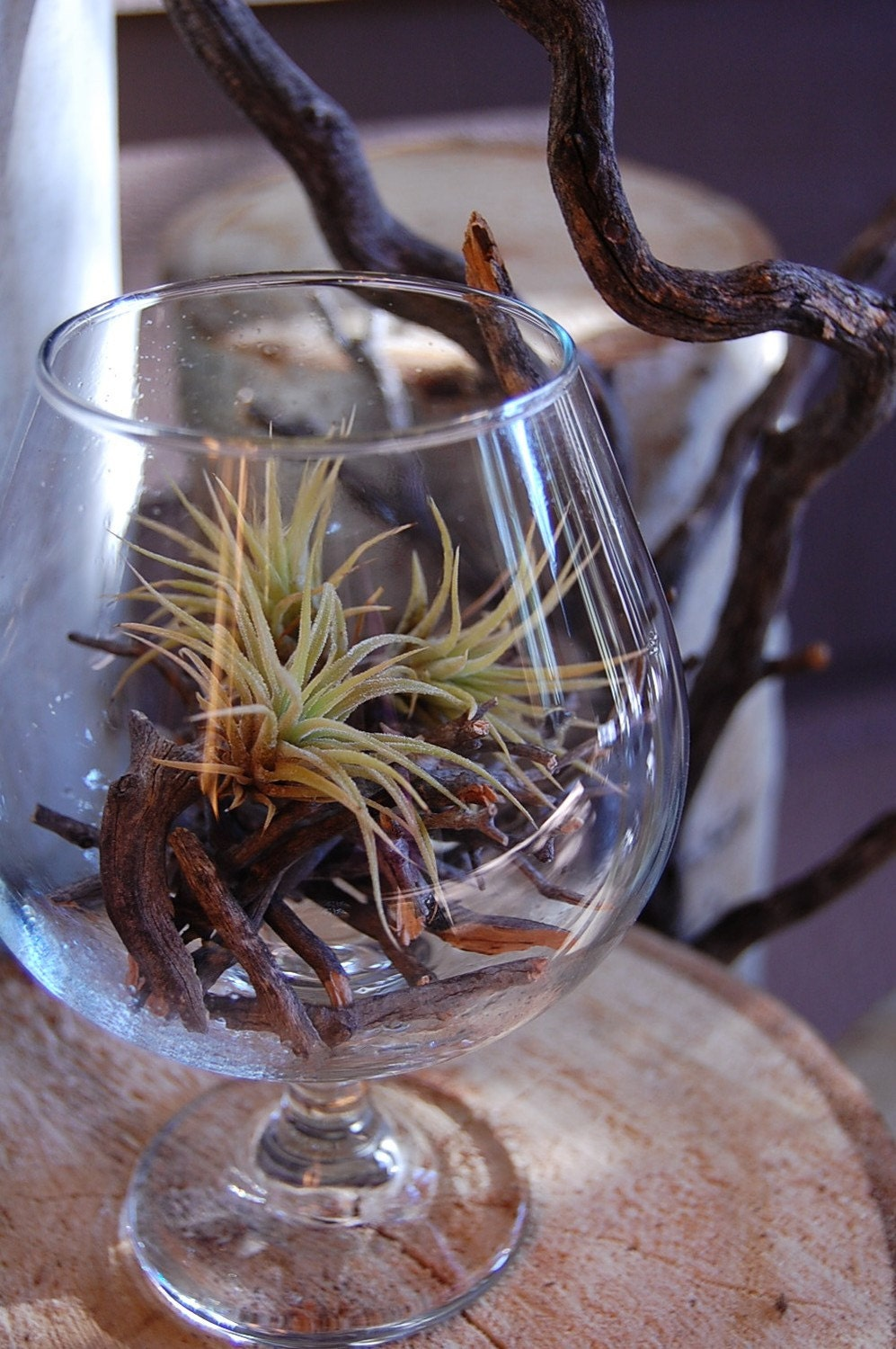 Ionantha Peach Air Plant Terrarium With Manzanita Branches