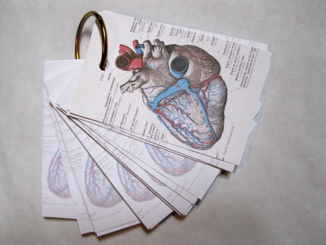 anatomyand