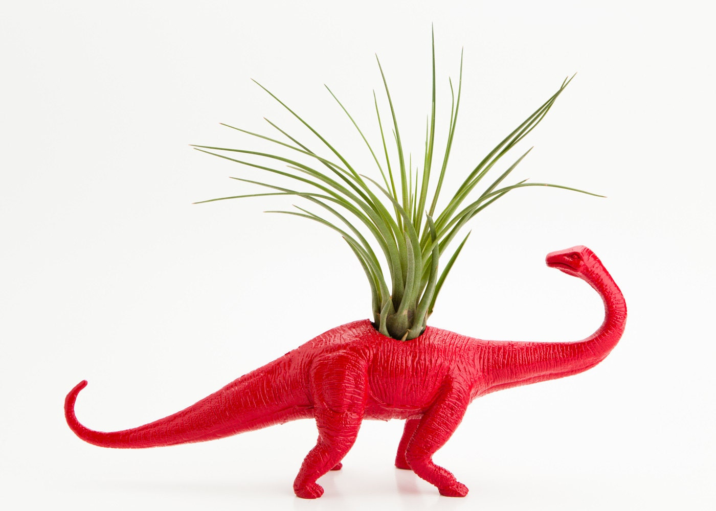 Tillandsia Dinosaur Planter with Air Plant Room Decor, Red College Dorm Ornament, Plants and Edibles, Red Toy Geekery - boygirltees
