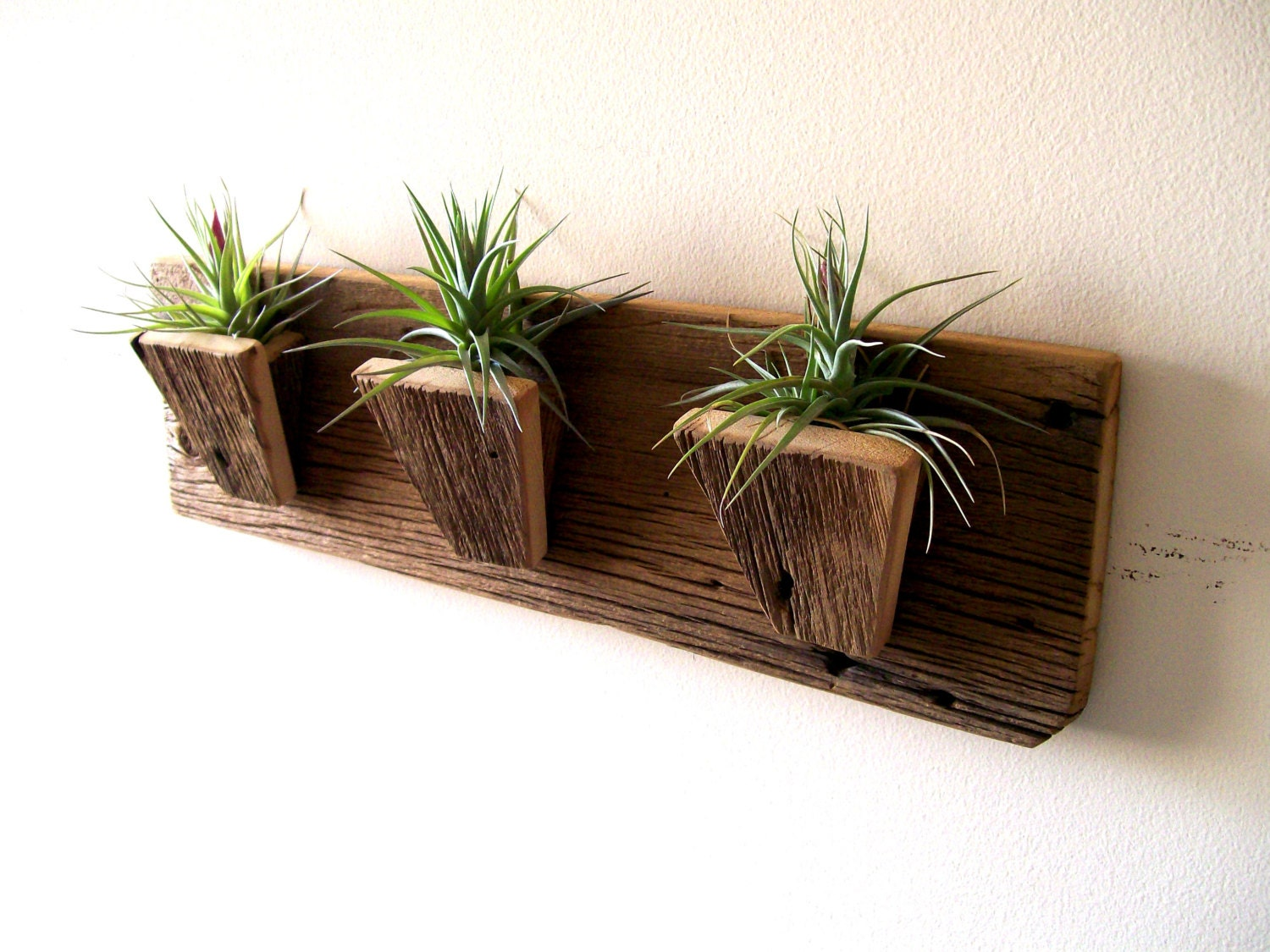 Air plant holder planters tillandsia air plants by for Air plant planters