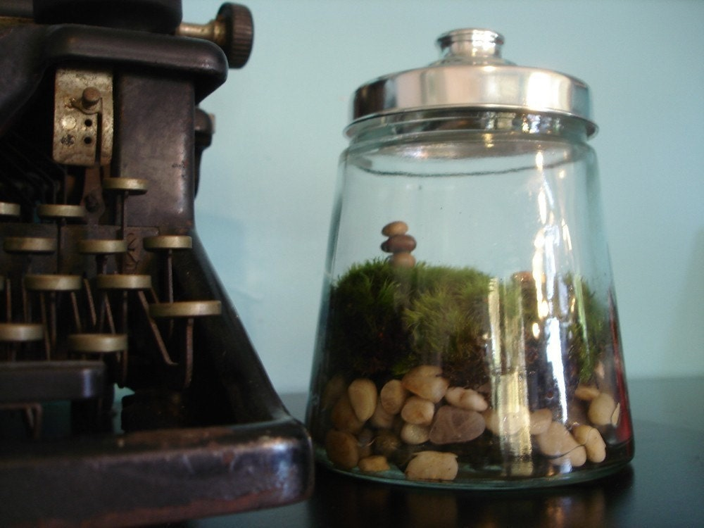 The Thoreau Moss Terrarium