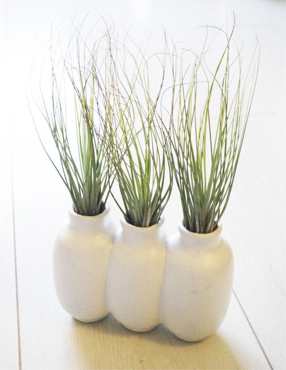 Three's Company Vase and Air Plants
