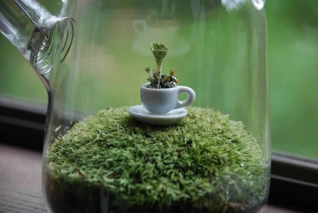 green tea with lichen