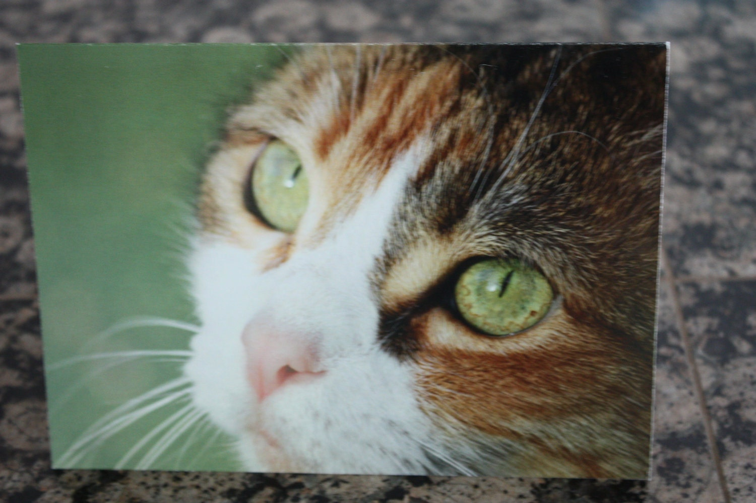 For Japan relief -- CALICO CAT blank greeting card -- 100% profits to Japan animal rescue